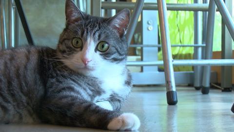 8月8日から放送 「看板猫がいるお店」