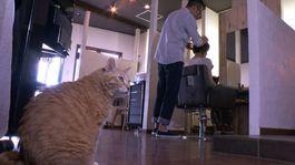 8月29日から放送「夏のスイーツカーニバル」「看板猫がいるお店」