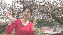 2017年4月8日(土)~14日(金)の放送予定
