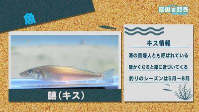 170624fishing006.jpg