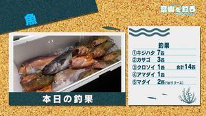 190126turifish005.jpg