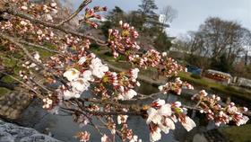 春といえば・・・