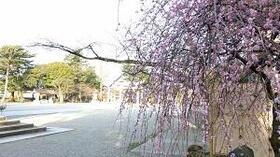 桜だけじゃない―